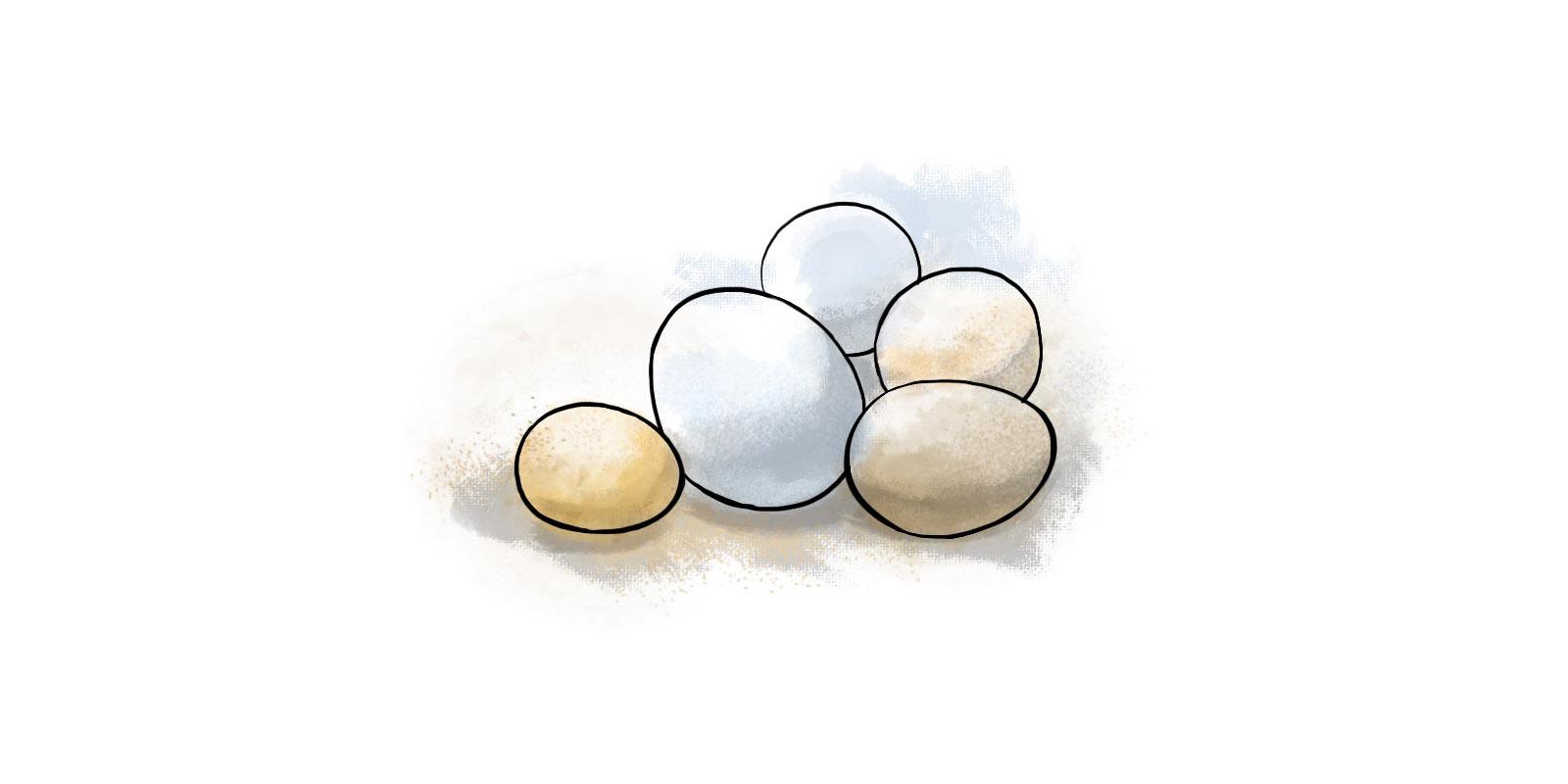 Придание цвета, функции яйца