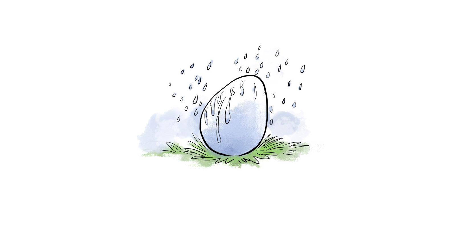 Обеспечение влажности, функции яиц