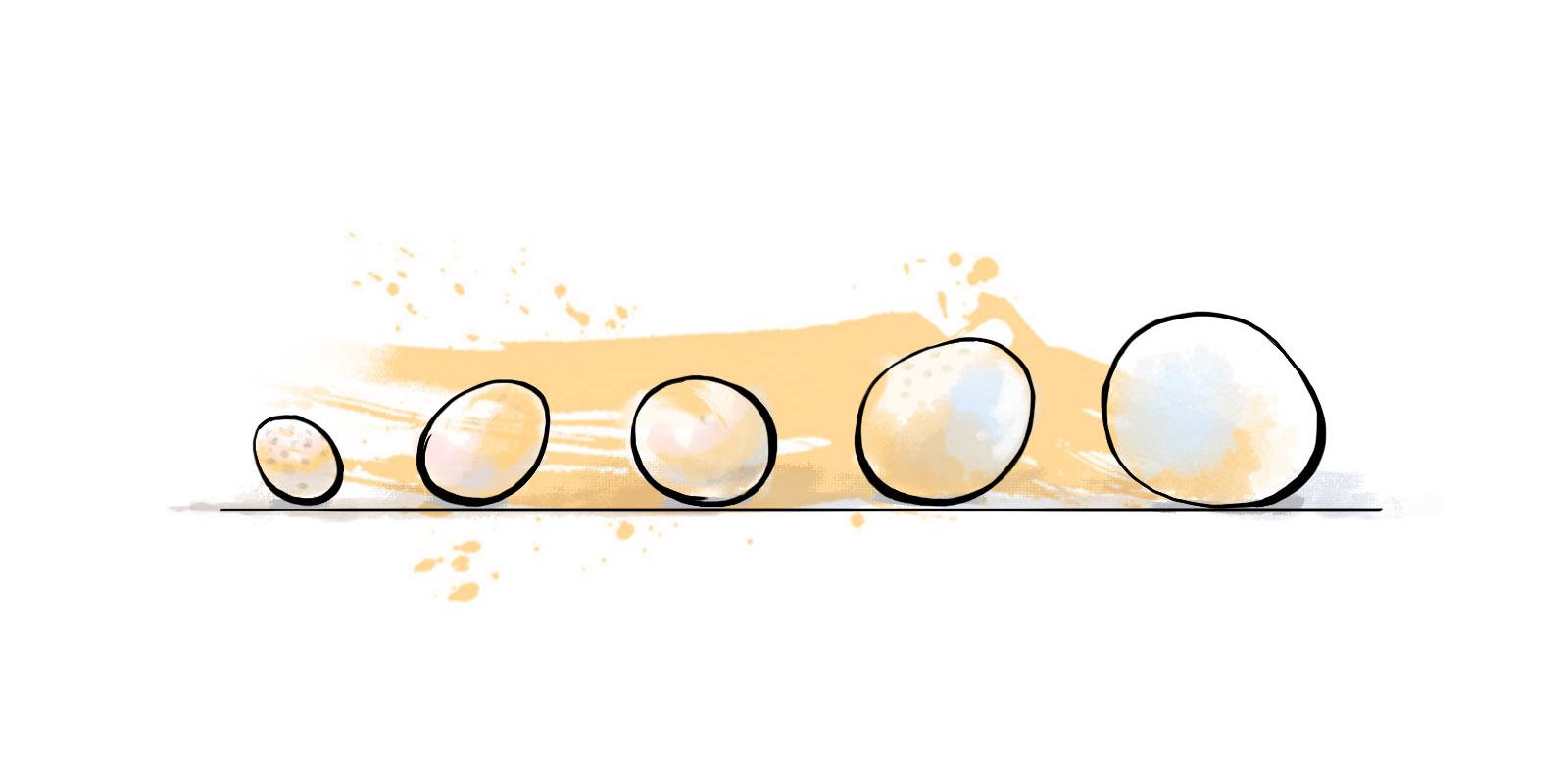 Ранг и размер яиц