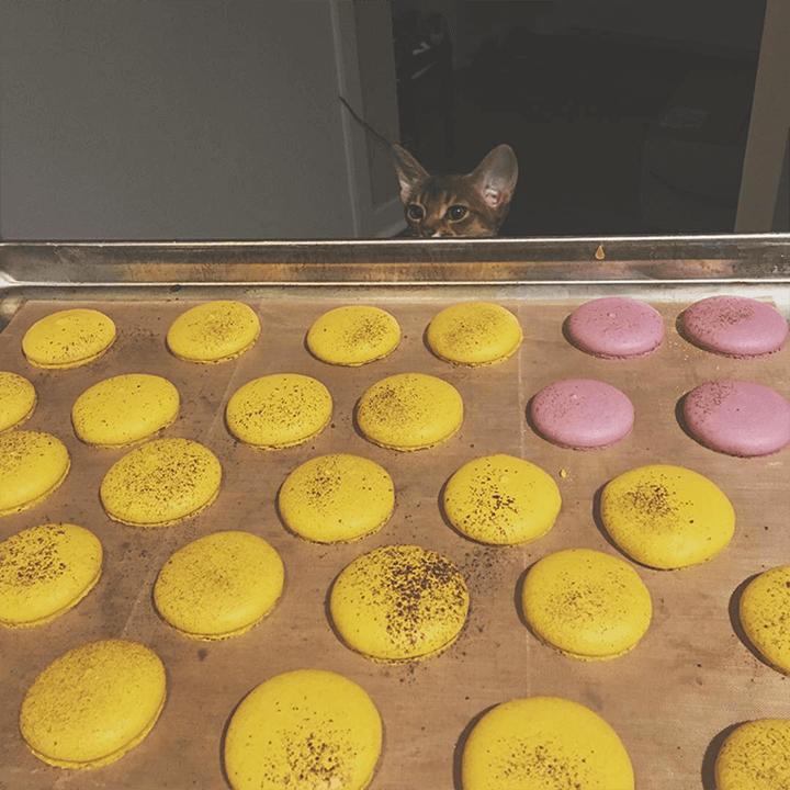 macarons_d